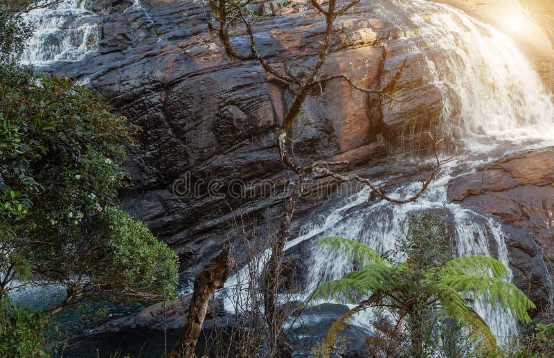 каскад водопада в тропическом тропическом лесе с утесом Шри-Ланка стоковые изображения rf