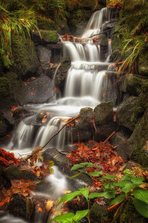 Каскад водопада садов Clyne стоковое изображение