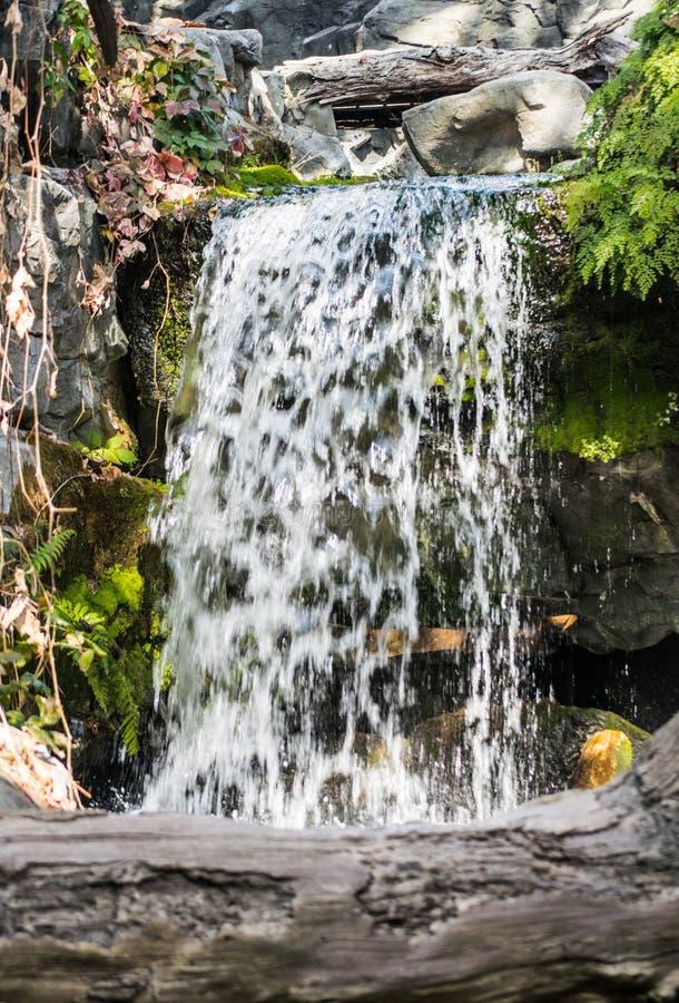 Каскадируя водопад в мхе леса около журнала стоковое фото