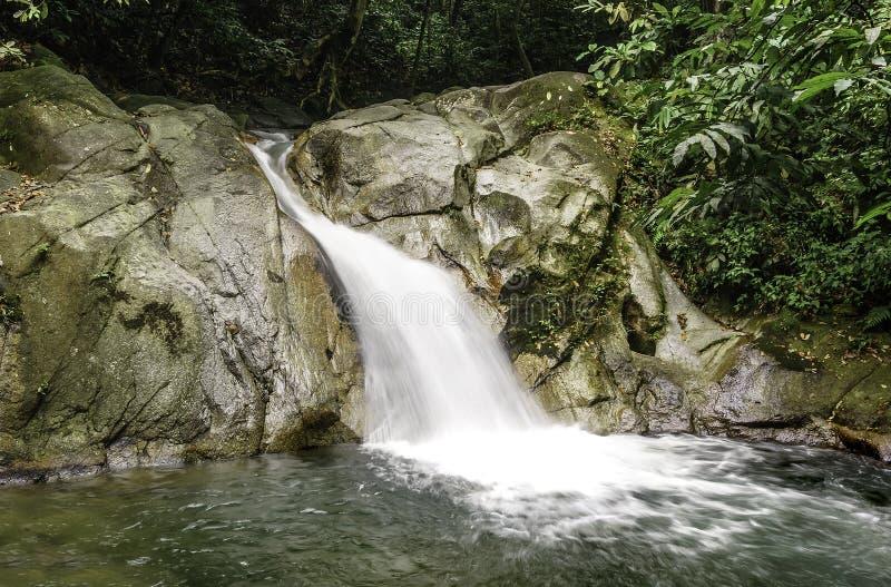 Каскады водопада стоковые фото