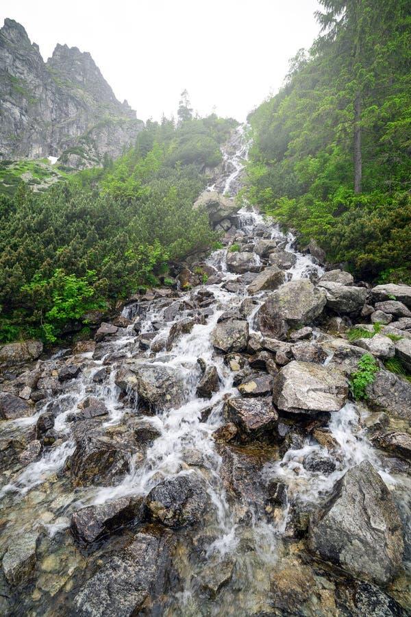 Каскады заводи горы в национальном парке Tatra стоковое изображение
