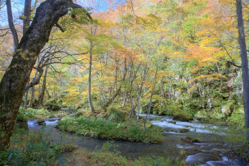 Каскады загадочного Oirase текут пропускать через красивые леса осени стоковая фотография