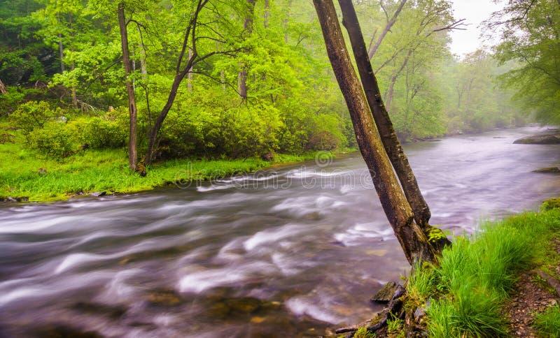 Каскады на реке пороха около резервуара Prettyboy в Balt стоковое изображение rf