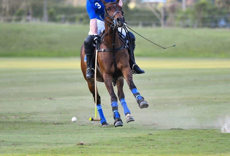 Катание игрока лошади поло для того чтобы контролировать шарик стоковое фото