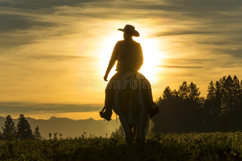 Катание ковбоя через злаковик с горами на заднем плане стоковые изображения