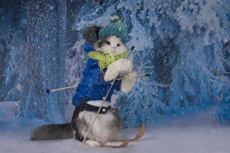 Катание на лыжах кота в парке зимы стоковая фотография