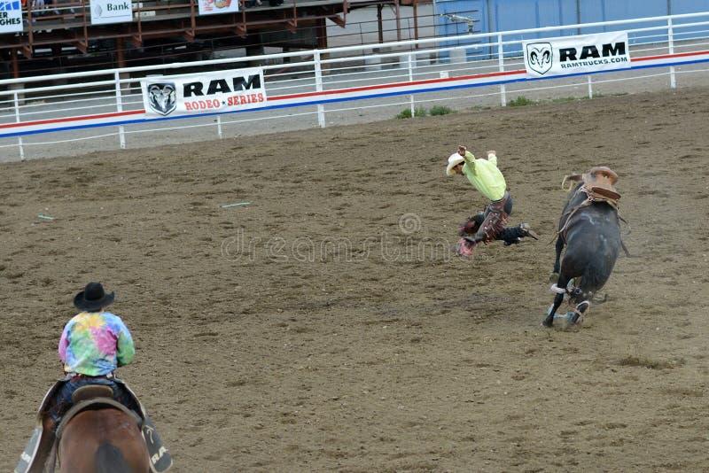 Катание Bull стоковое фото