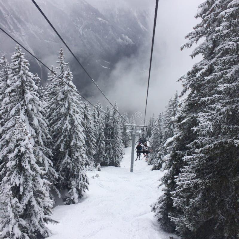 Кататься на лыжах в потерянном лесе стоковое фото