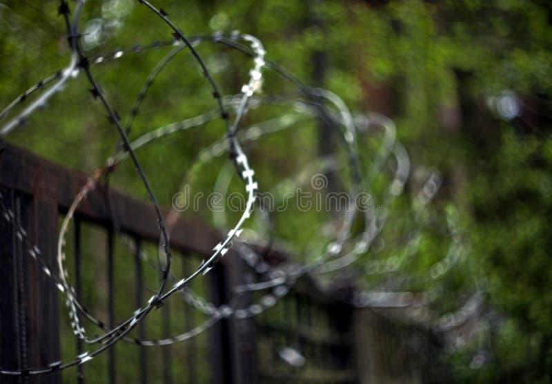Катушки колючей проволоки на загородке металла с запачканной предпосылкой зеленых листьев деревьев стоковые фото