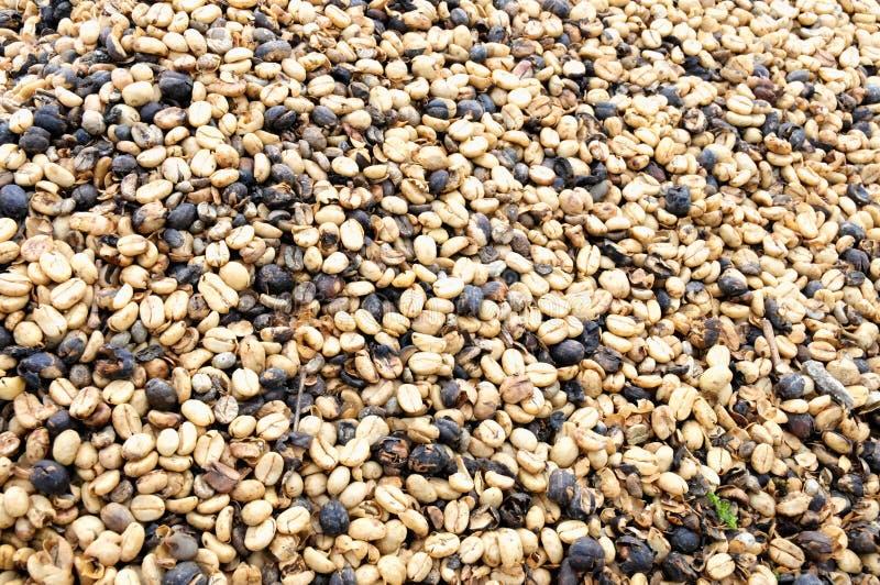 качество плантаций самого лучшего кофе превосходное стоковая фотография