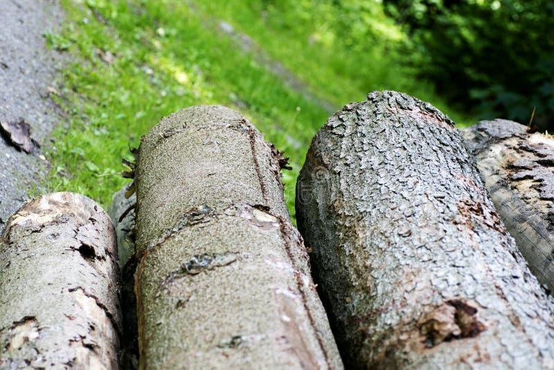 Качество самое лучшее предпосылки макроса дела дерева стоковые изображения
