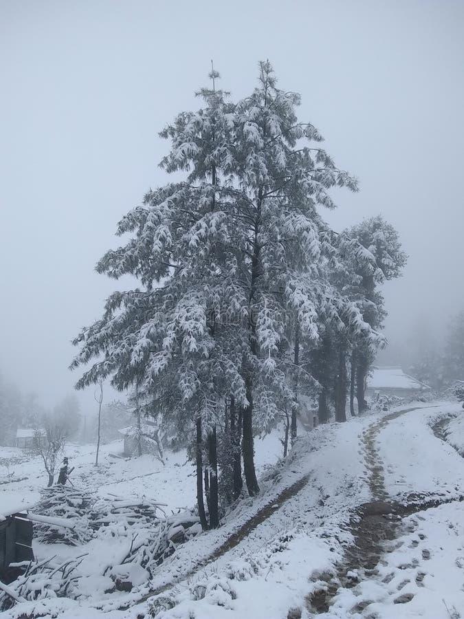 Кашмир стоковые фото