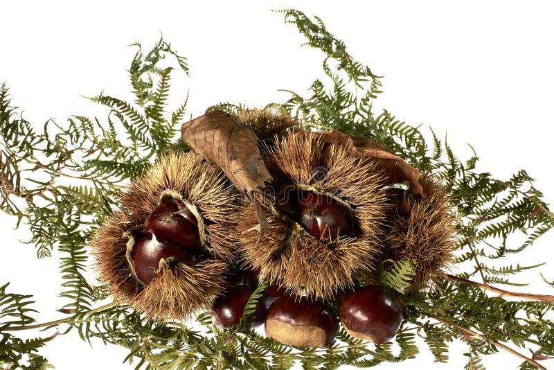 Каштан, осень, еда, органическая, Италия стоковые изображения rf