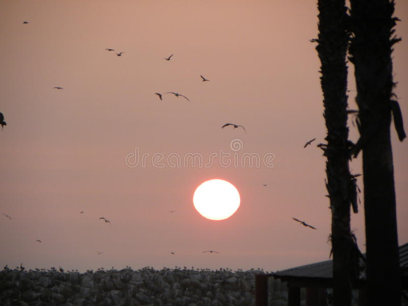Калифорния Солнце стоковые фото