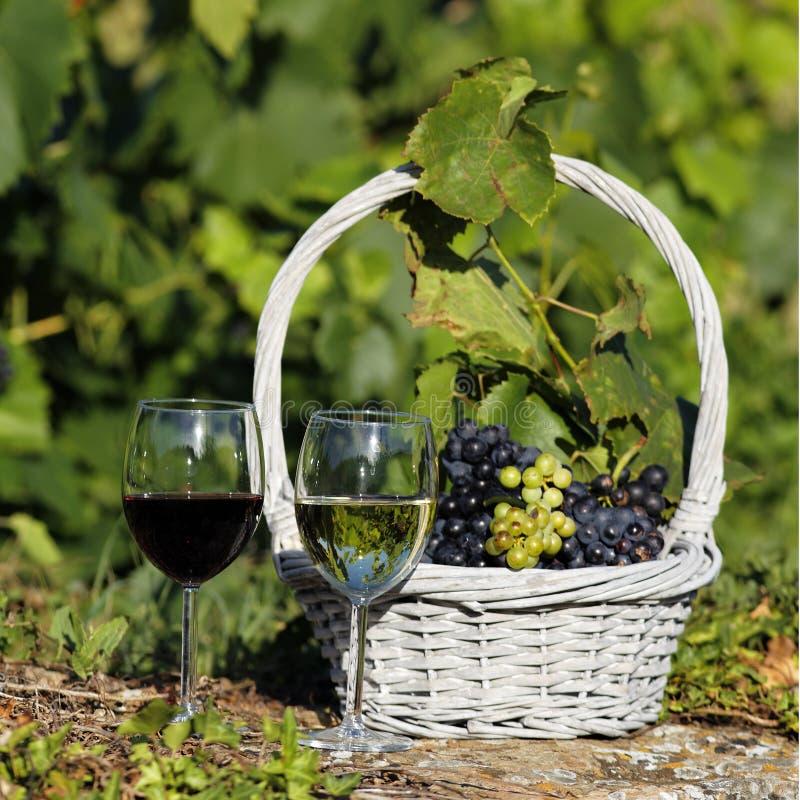 квадратное вино стоковые изображения