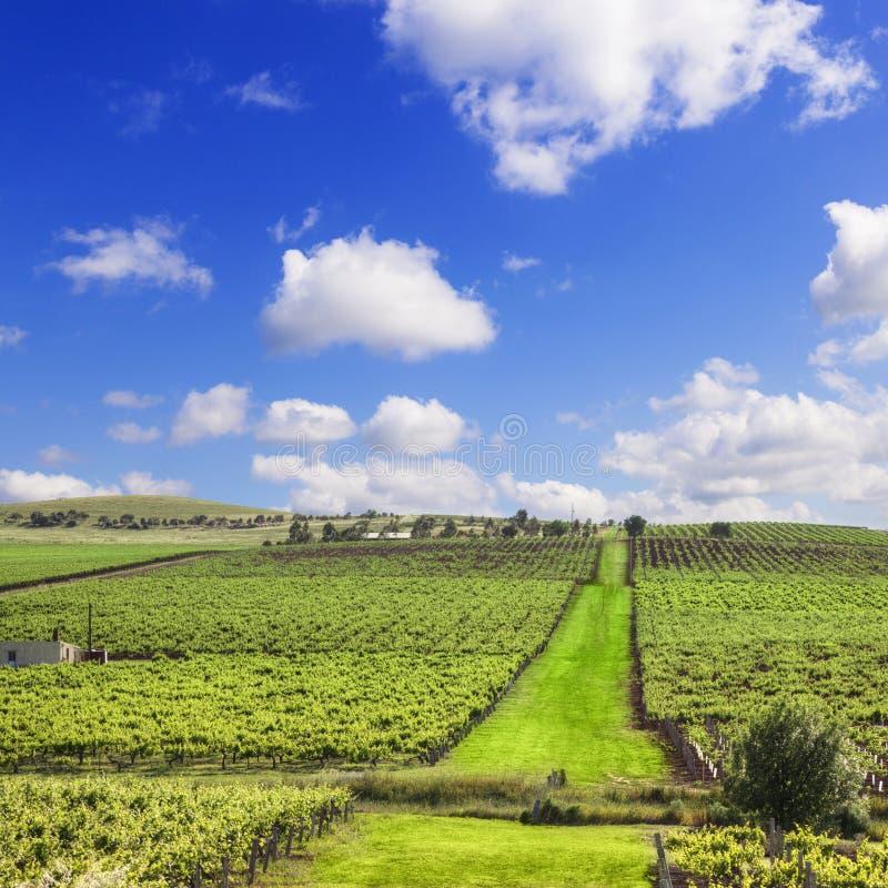 Квадрат южной Австралии виноградника стоковые изображения rf