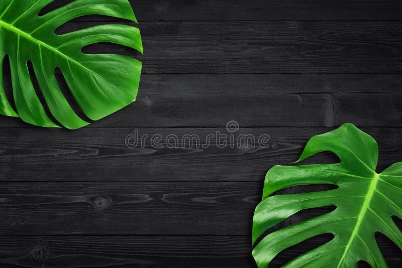 Квартира лист творческого лета плана тропическая кладет состав Зеленый тропик выходит рамка с космосом экземпляра на предпосылку  стоковое фото rf