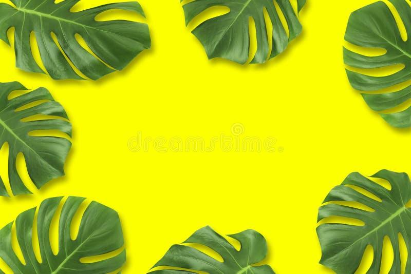 Квартира лист творческого лета плана тропическая кладет состав Зеленый тропик выходит рамка с космосом экземпляра на пастельную ж иллюстрация штока