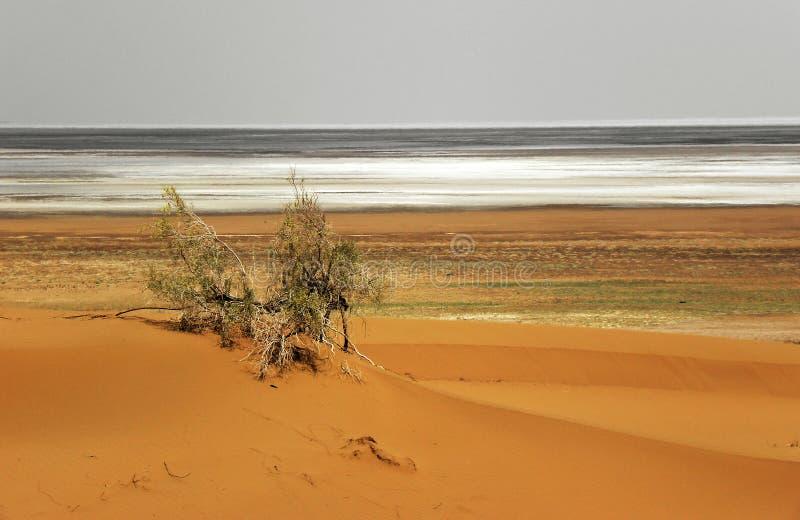 Квартира пустыни и соли стоковые фотографии rf
