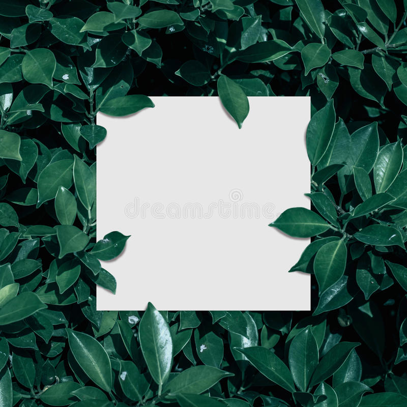 Квадратные рамка, пустая для карточки рекламы или приглашения стоковые фотографии rf