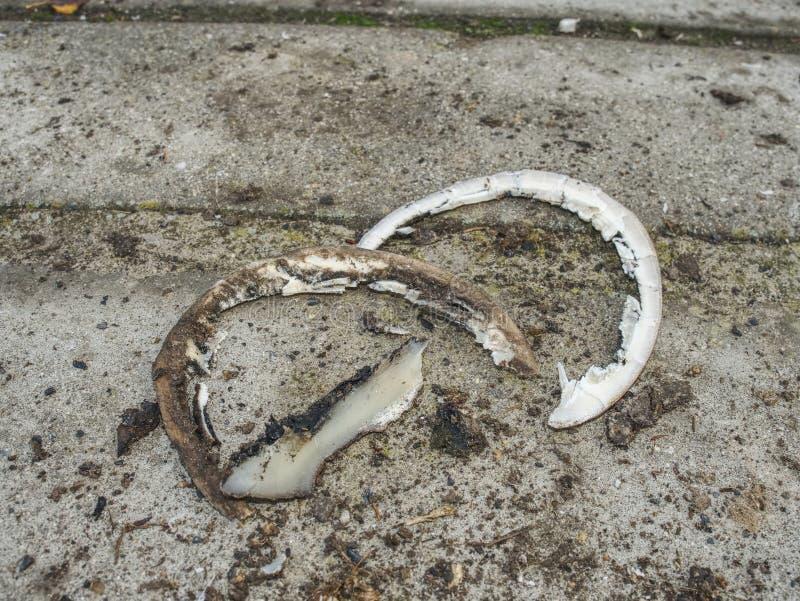 Кератин талии после модуляции копыт лошади стоковое изображение