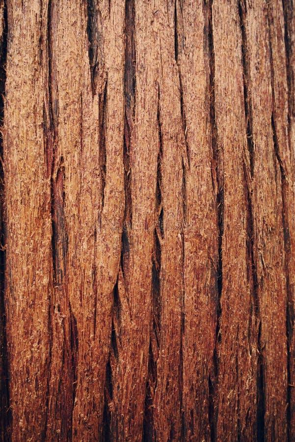 Кедр стоковое изображение