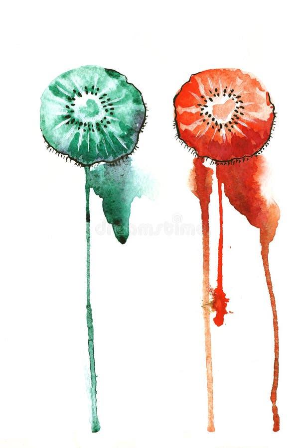 Киви Colorfull стоковые изображения rf