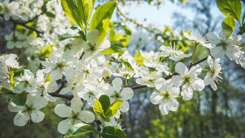 04 23 2019 - Киев, Украина Ботанический сад в центре столицы Украины Зацветая деревья, красивый ландшафт стоковое изображение rf