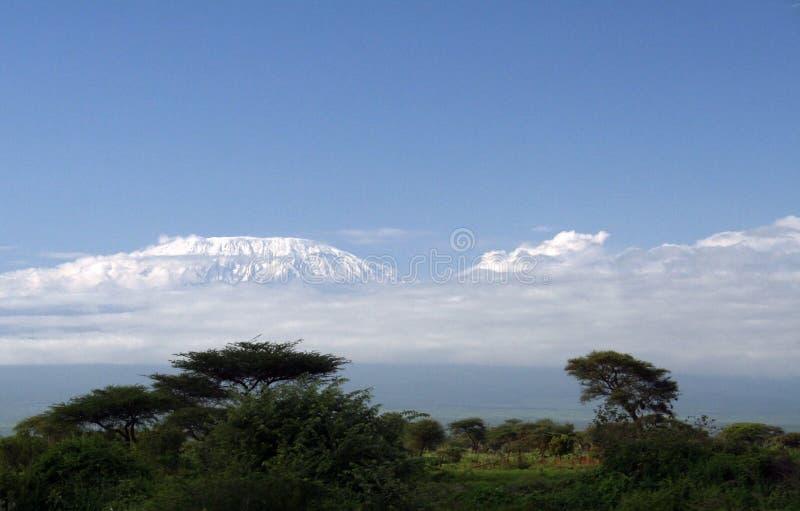 Килиманджаро стоковая фотография rf
