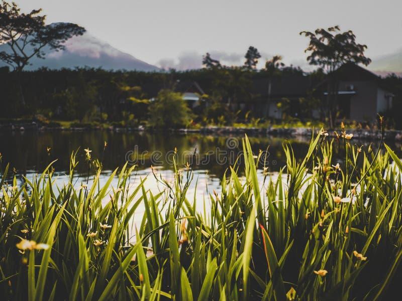 Кинематографический заход солнца в Индонезии стоковое фото rf