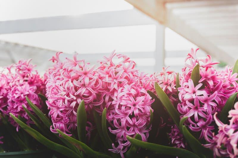 Кинематографический пинк цветет предпосылка с солнечным светом в саде стоковые фото