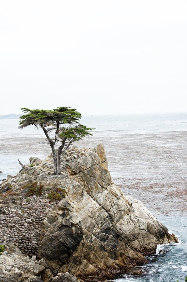 Download Кипарис 17 миль Привод-уединённый Редакционное Изображение - изображение насчитывающей туман, ветер: 33737555