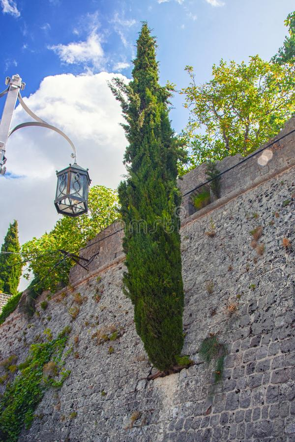 Кипарис растя от каменной стены Старый городок в Адвокатуре Черногории города стоковое изображение