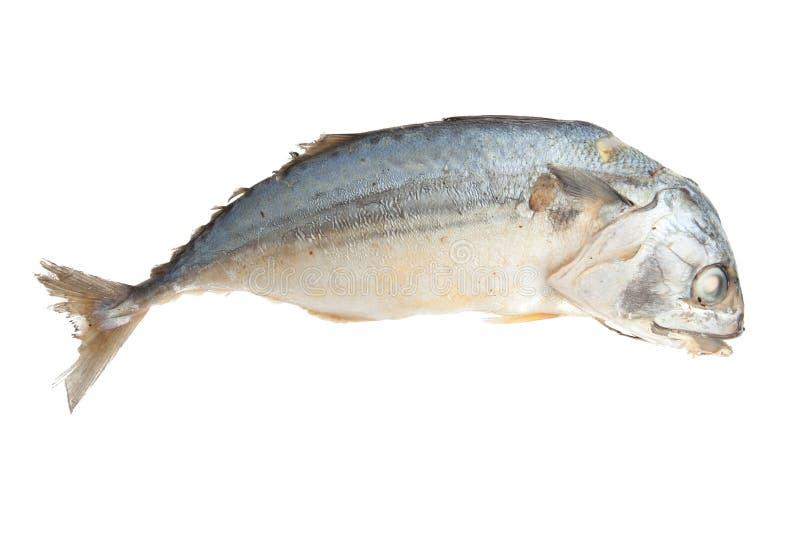Download Кипеть скумбрия изолированная на белой предпосылке Стоковое Фото - изображение насчитывающей серо, среднеземноморск: 40591214