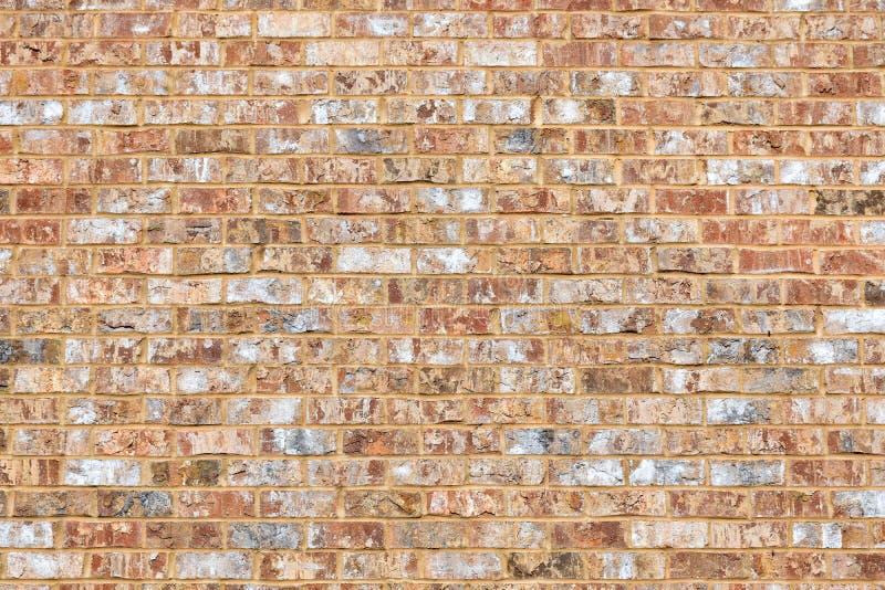 Кирпичная стена Sandy покрашенная кораллом стоковые фото