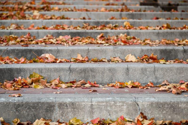 Кирпич и конкретный тротуар лестниц города с листьями осени стоковые фотографии rf