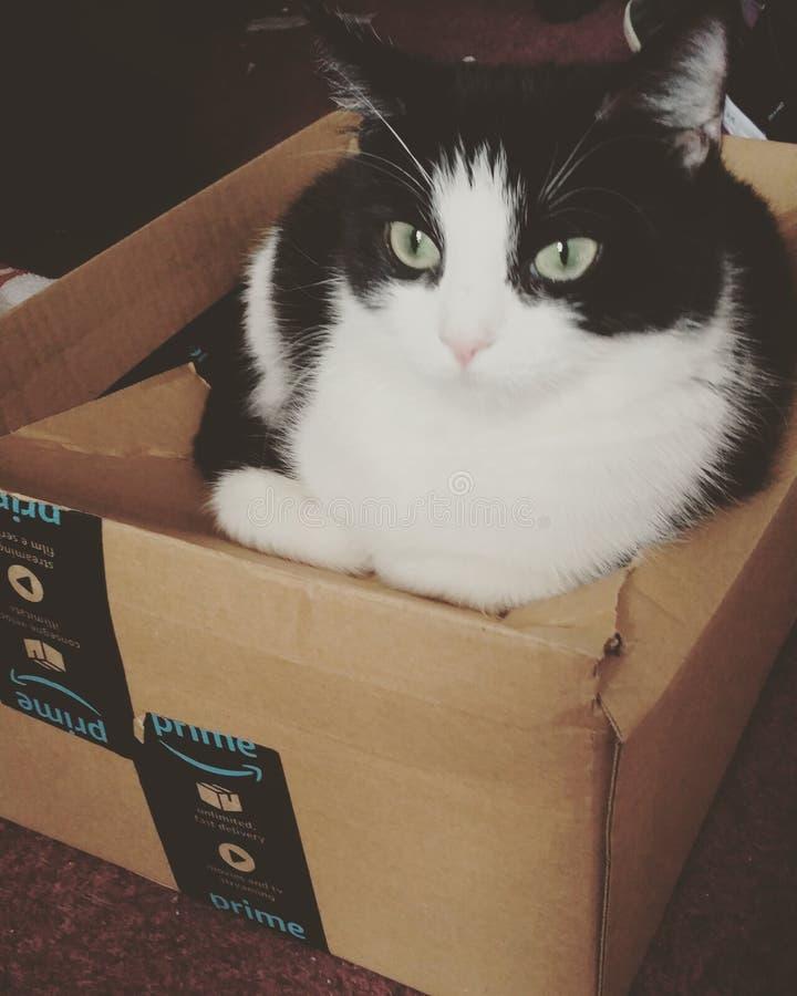 Киска коробки стоковая фотография rf