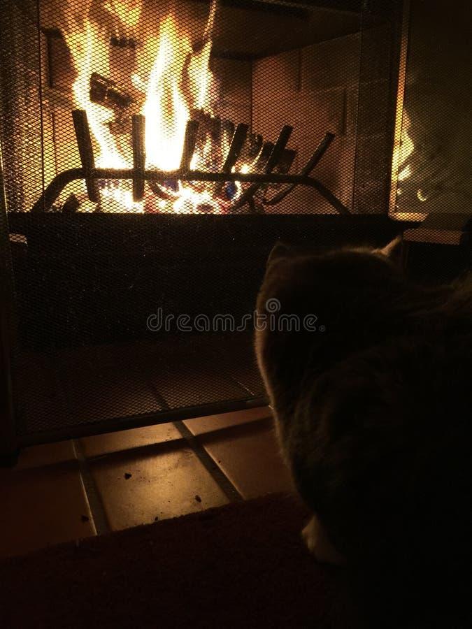Киска наблюдая огонь стоковое фото rf