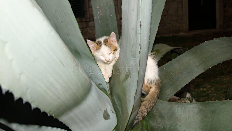 Киска обернутая вокруг завода кактуса стоковая фотография rf