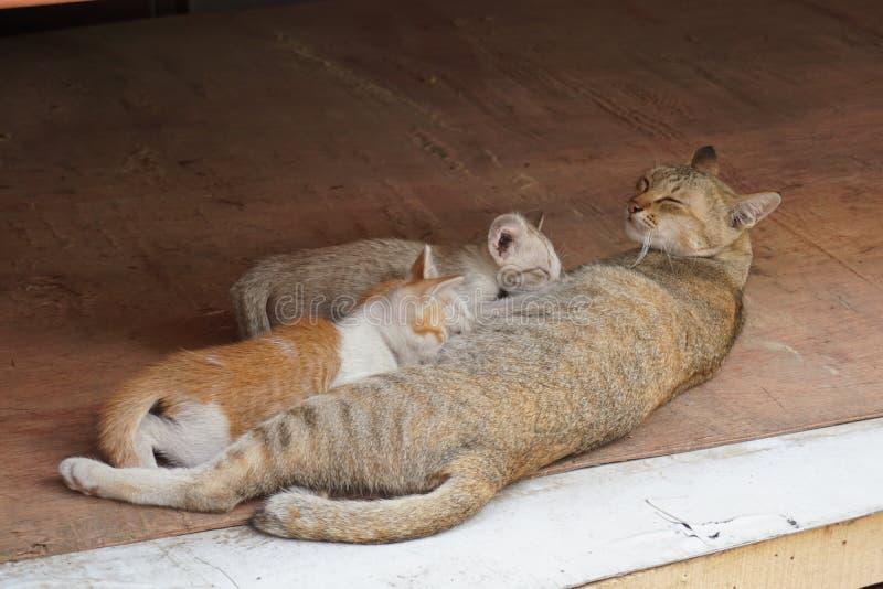 Киска питания матери кота стоковое фото