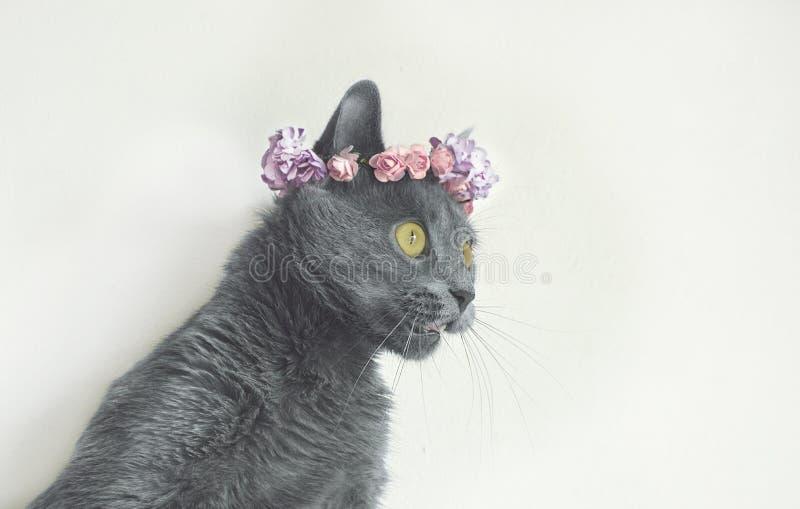 Киска портрета молодая серая в венке цветков стоковые фотографии rf