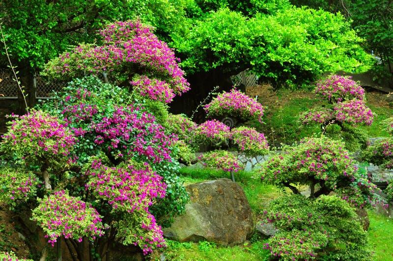 китайская весна сада стоковое фото