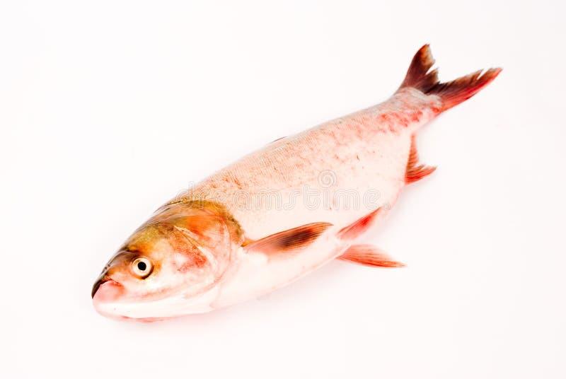 китайская испаренная еда рыб стоковое изображение