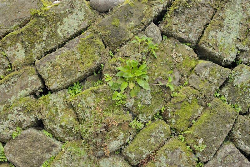 Китайская древняя стена стоковая фотография
