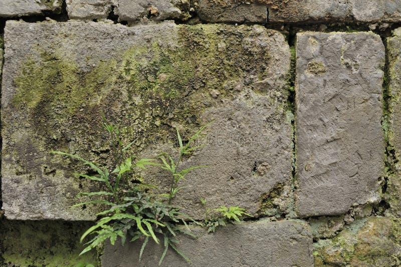 Китайская древняя стена стоковая фотография rf