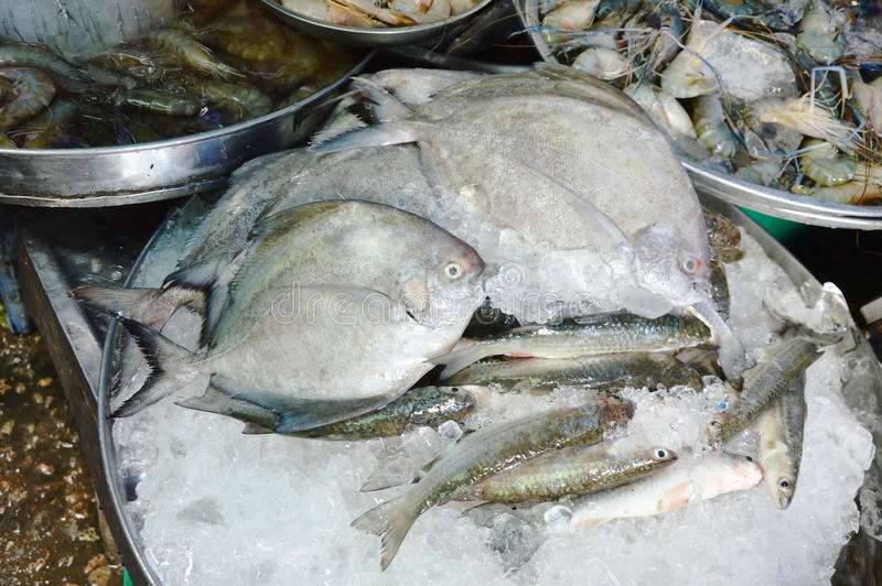 Китайские серебряные рыбы pom-лада и морепродукты разнообразия на льде в нержавеющем подносе для продажи стоковое фото