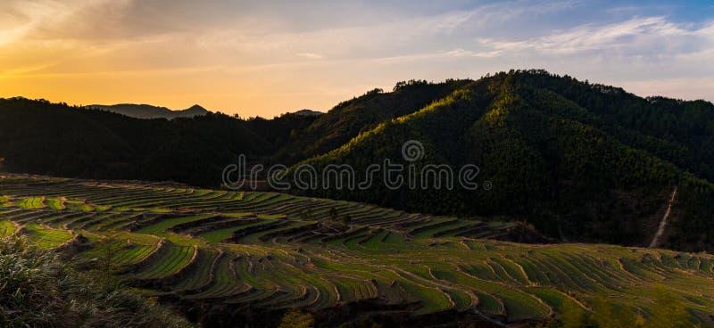 Китайские террасы фермы на заходе солнца - панораме стоковая фотография