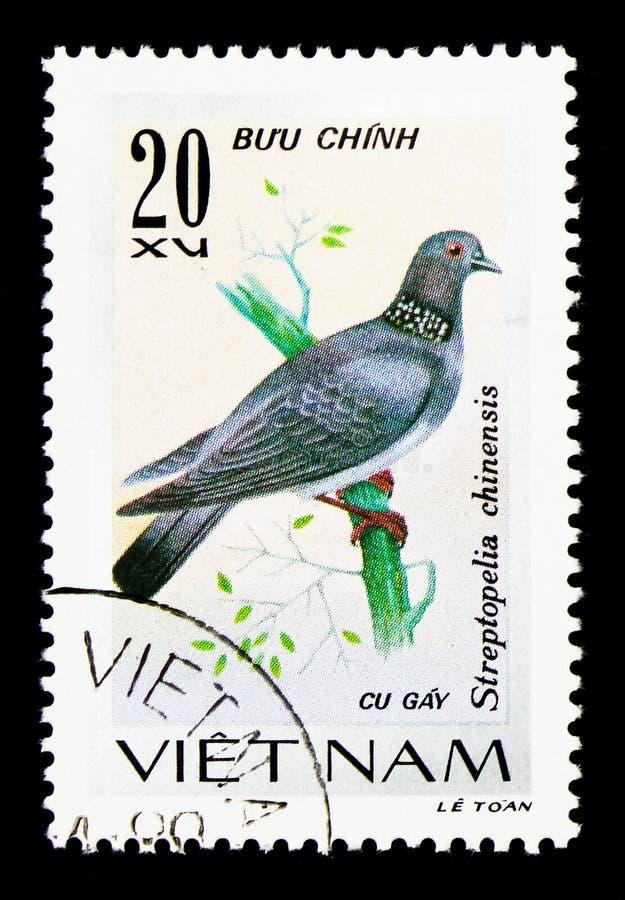 Китайский запятнанный голубь (горлица chinensis), serie воробьинообразных птиц, около 1978 стоковые фото