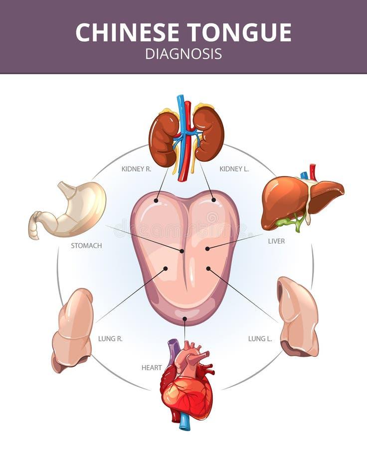Китайский диагноз языка внутренние органы иллюстрация вектора