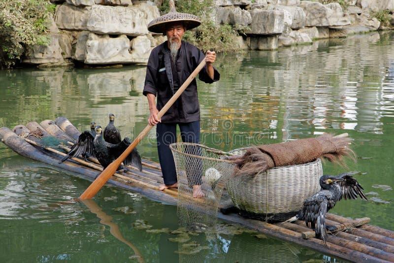 китайский рыболов cormorant стоковые изображения